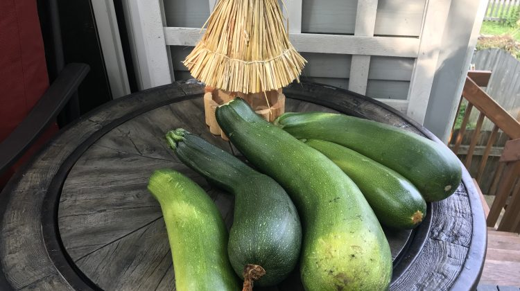 Tempt Your Tastebuds with Delicious Zucchini Recipes